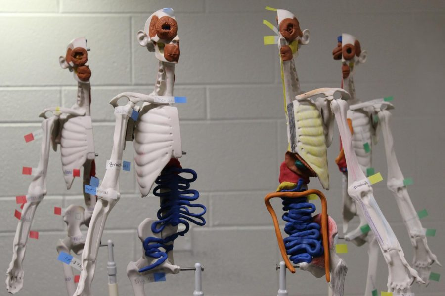 Student-constructed models stand tall in a West Campus biology classroom. Health classes in Illinois and across the country spent more time talking about about the body than safe ways to have sex.