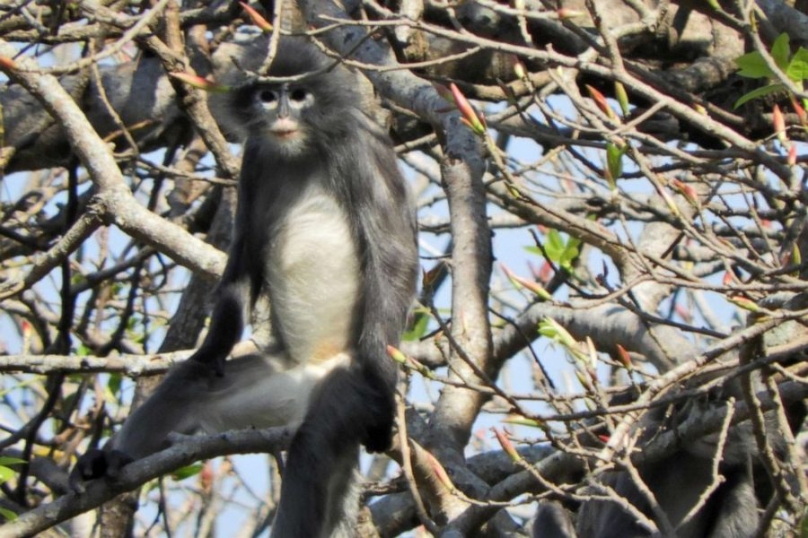 Recently discovered primates critically endangered
